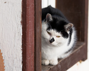 Szukaj Zdjęć Dziki Kot