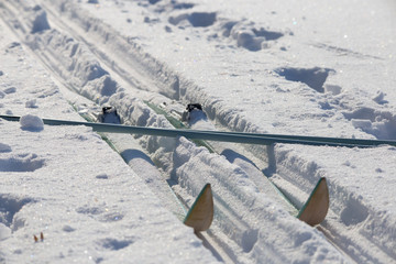 Cross-country skiing equipment on snow field. Healthy lifestyle wintersport. Crossed skis and ski poles on track