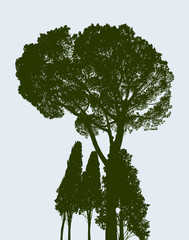silhouette of a pine and the cypresses
