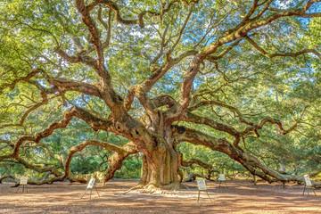 charleston's magical angel oak tree, one of the oldest live oak in USA Wall mural