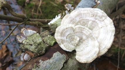 Forest Mushroom #3