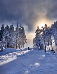 Winter trees in mountains covered with fresh snow. Poiana Brasov ski resort,Transylvania,Romania,Europe,Pine forest covered in snow on winter season