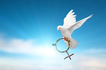 white dove holding green branch in Venus symbol shape flying on blue sky for International Women's Day background