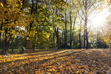 trees in autumn season