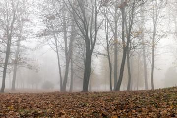 Fog in autumn season