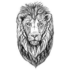Hand drawn sketch of lion head. Vector illustration.