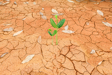 Green sprout growing from cracked earth, environment concept