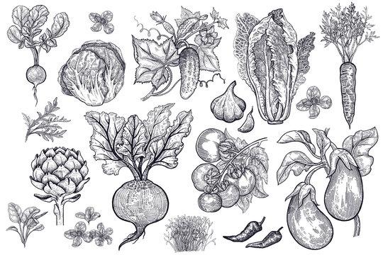 Vegetables vector set.