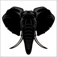 Elephant head. Isolated on white.