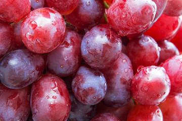 Rote Weintrauben Fototapete