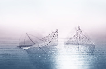 Transparent skeleton leaves in the form of ships at sea at sunrise in a fog on blue and pink background. Romantic artistic image close-up macro. Template  border wallpaper for travel dreams.