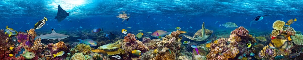 Wall Murals Panorama Photos colorful super wide underwater coral reef panorama banner background with many fishes turtle shark and marine life