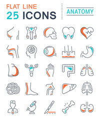Set Vector Flat Line Icons Anatomy