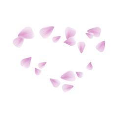 Pink Purple flying petals isolated on white. Sakura petals. Heart of petals. Vector