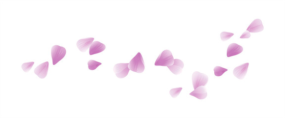 Pink Purple flying petals isolated on white. Sakura petals. Vector