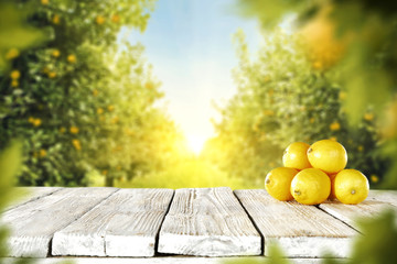lemon fruits  Fototapete