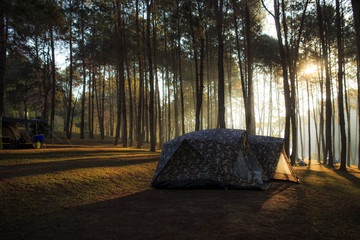 tent under the pine forest at morning against the bright sunligh