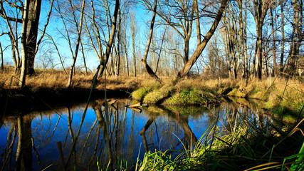 Biotop - Altwasser - Tümpel im Herbst