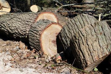 Der kleingesägte Baumstamm