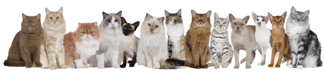 Große Katzengruppe mit mehreren Katzen nebeneinander sitzend