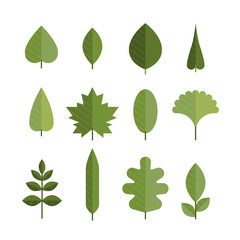 Set of different flat green leaves.