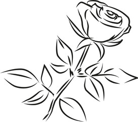 rose vector picture