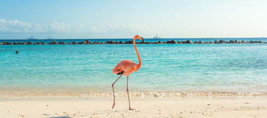 In de dag Flamingo Flamingo on the beach. Aruba island
