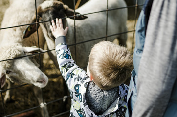 High angle view of boy stroking goat while standing with brother