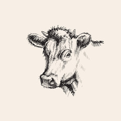 Hand Drawn Sketch Cow Vector illustration
