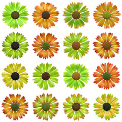Seamless flower pattern  - set of several inflorescence