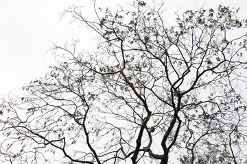 branch of treetop and sky ,white background of treetop