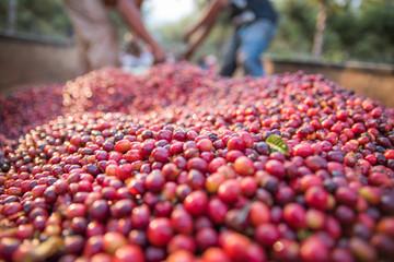 Fotobehang koffiebar Granos de café
