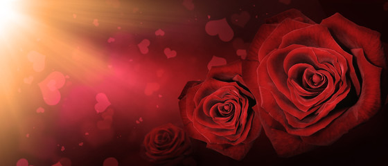 Rosen - ein Zeichen der Liebe