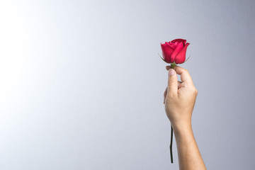 A man hand with red rose flower