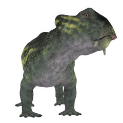 Lytrosaurus Dinosaur on White - Lystrosaurus was a dicynodont therapsid dinosaur that lived in the Permian and Triassic Periods of Antarctica, India, Africa, China, Mongolia and Russia.