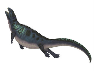 Placodus Dinosaur Side Profile - Placodus was a marine reptile that swam in the shallow seas of the Triassic Period in Europe and China.