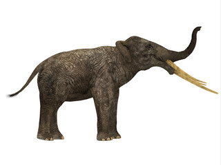 Stegotetrabelodon Side Profile - Stegotetrabelodon was an elephant that lived in the Miocene and Pliocene Periods of Africa and Eurasia.