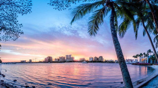West Palm beach skyline with Palm in foreground
