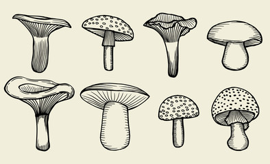 hand-drawn vintage mushrooms