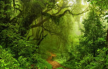 Photo Stands Road in forest Deep tropical jungles of Nepal