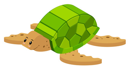 3D design for sea turtle