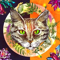 illustration with animal