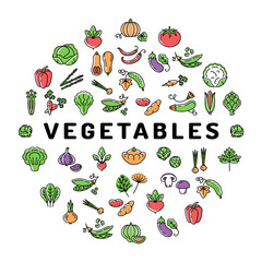 Vegetable icon circle infographics colorful veggies banner. Mega set of isolated vegetables symbols. Trendy thin line icons, Vector flat illustration