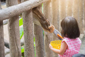 The Giraffe received food from little girl with sweet relationsh