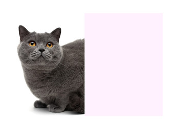cat with yellow eyes sitting at the banner on a white background