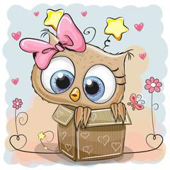 Cute Owl in a box
