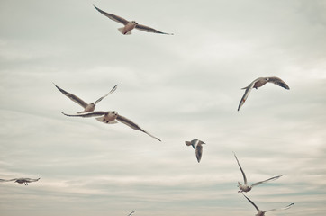 Seagulls hover in the sky.
