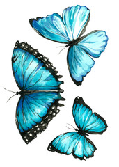 A set of blue watercolor painted butterfly in hand