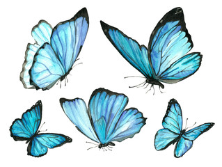 A set of blue watercolor butterfly