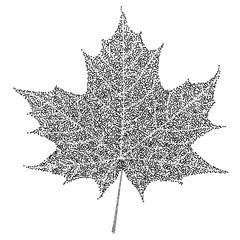 Black and white maple leaf on white background. Vector eps10 illustration